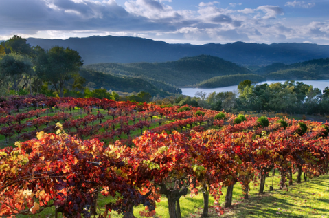 Gay couples are getting married outside their hometowns in scenic destinations such as Napa Valley | Photo by Tom Post via flickr